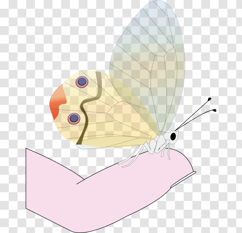 Butterfly Drawing Clip Art Transparent PNG