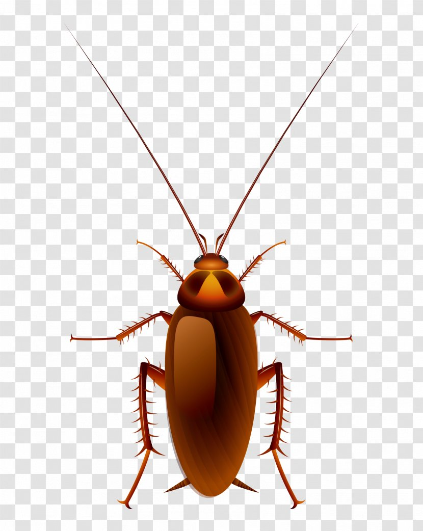 Cockroach Oggy Cartoon Clip Art Invertebrate Vector Hand Painted Red Back Transparent Png