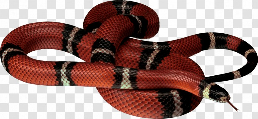 Corn Snake Reptile Clip Art - Redbellied Black Transparent PNG