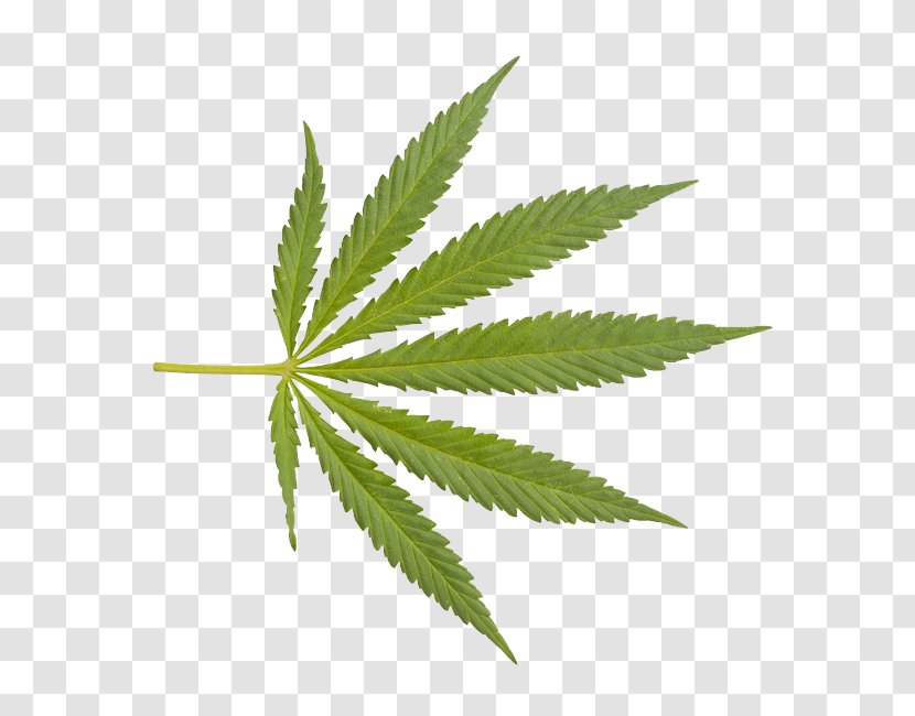 Cannabis Sativa Drug Clip Art - Hemp Family Transparent PNG