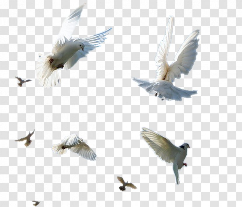 Bird Flight Shush, Iran - Photography - Birds Flying Element Transparent PNG