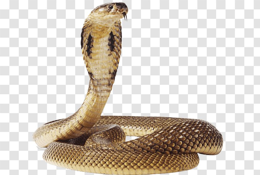 Snake Vipers Reptile Clip Art - Viper Transparent PNG