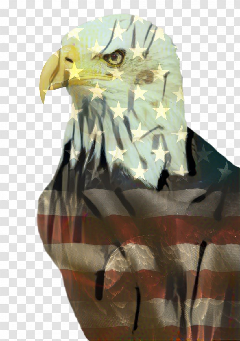 Fourth Of July Background American Shoe Bird Prey Transparent Png