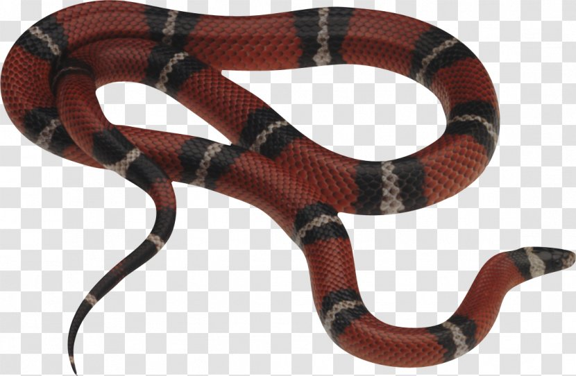 Solid Snake Reptile Venomous Eastern Brown - Image Picture Download Free Transparent PNG