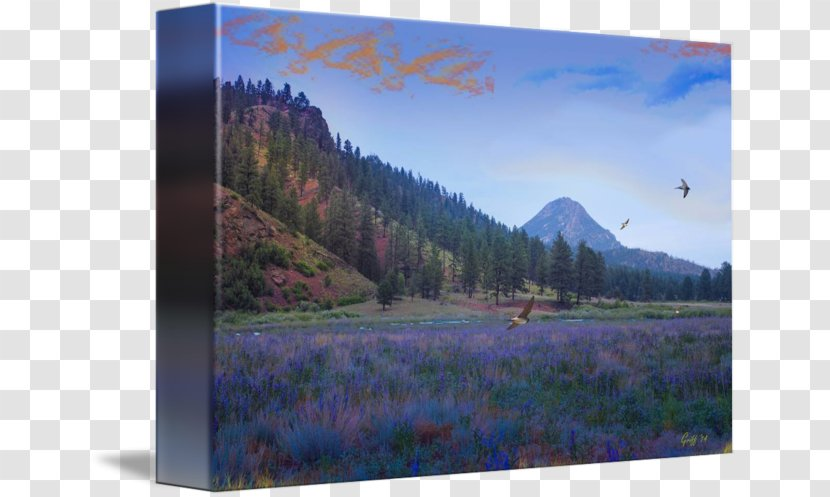 Mount Scenery National Park Picture Frames Inlet Frame Lavender Fields Transparent Png