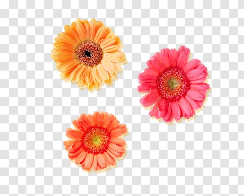 Tiff - Information - Flower Transparent PNG