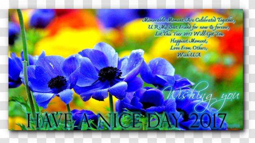 Desktop Wallpaper High Definition Television Display Resolution 4k Flower Plant Transparent Png
