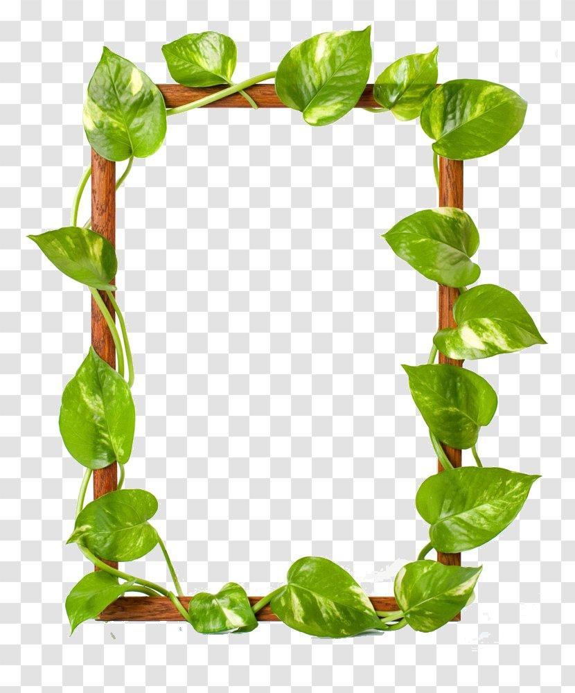 Picture Frame Raster Graphics Leaf Clip Art Grass Green Leaves Border Transparent Png