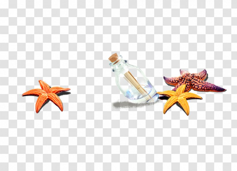 Starfish Beach Sea Computer File - Decoration Transparent PNG