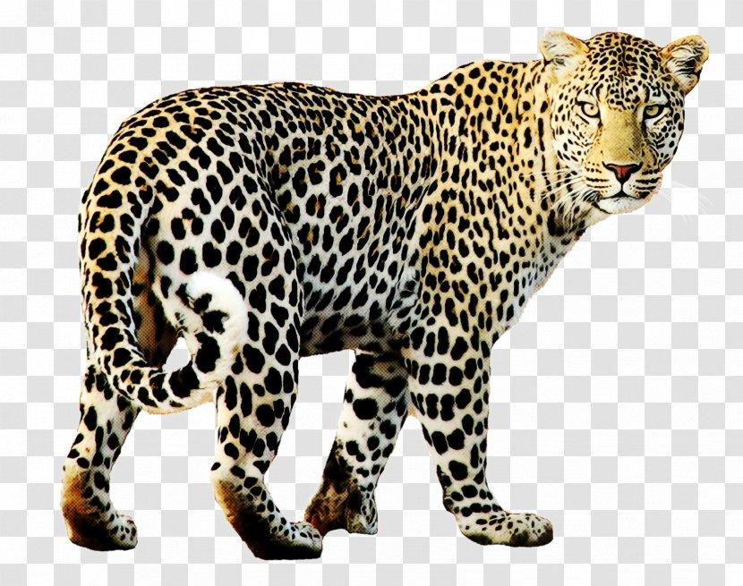 Leopard Jaguar Wildlife Animal Figure Transparent PNG