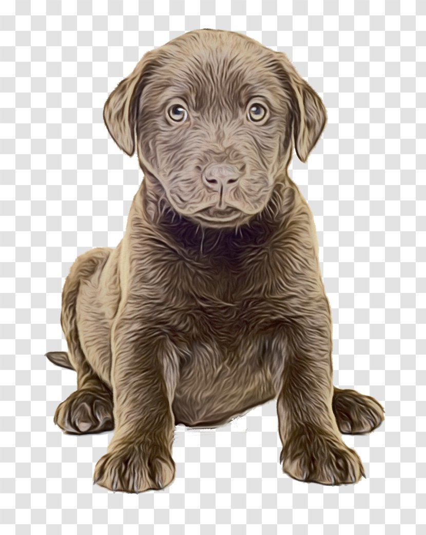 Golden Retriever Background Pet Weimaraner Liver Transparent Png