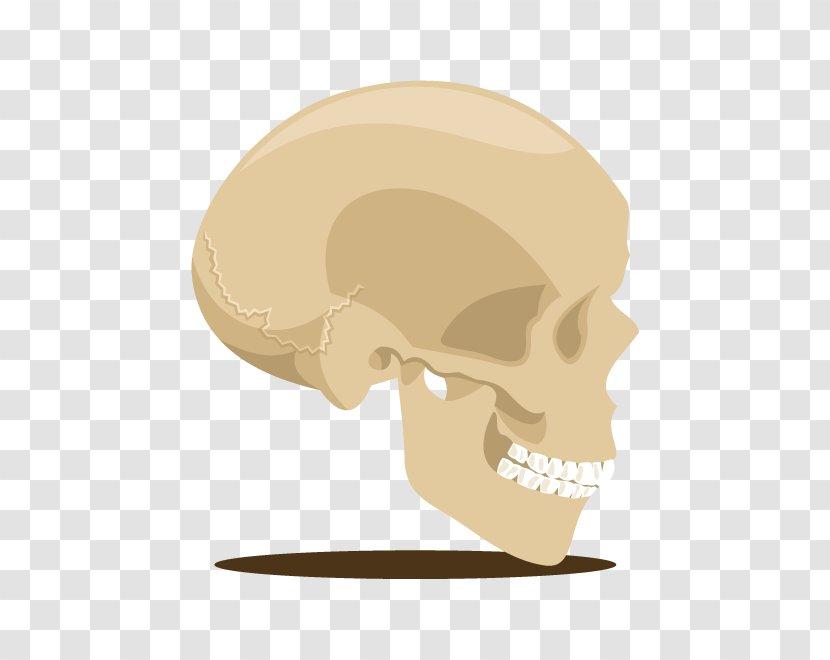 Skull Skeleton U9ab7u9ac5 Head - Bone - Vector Transparent PNG