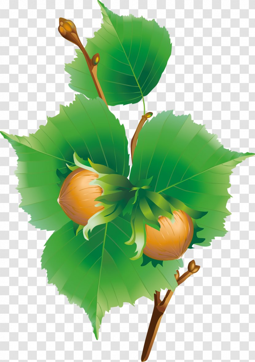 Horse chestnut leaf free vector download (6,113 Free vector) for commercial  use. format: ai, eps, cdr, svg vector illustration graphic art design