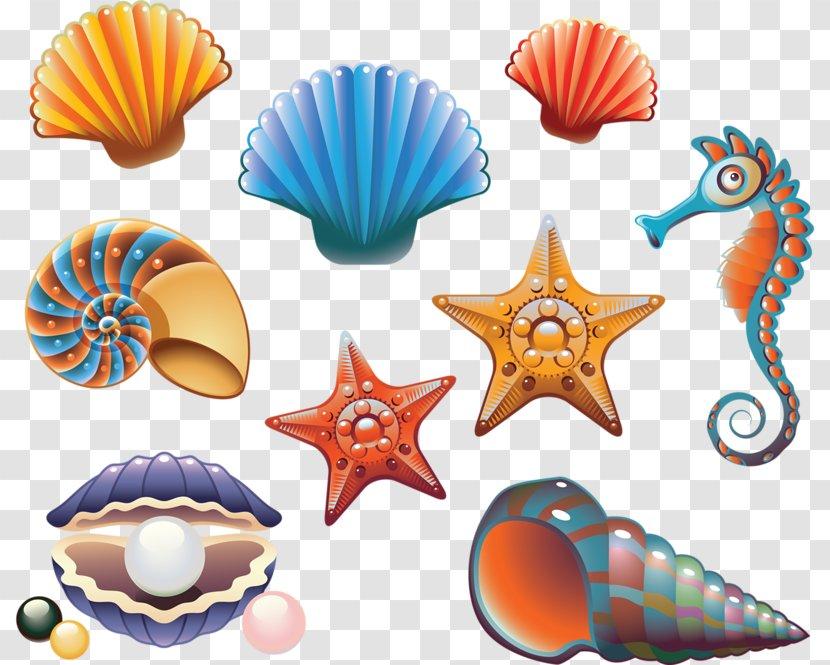 Seashell Drawing Royalty-free Illustration - Sea - Starfish Transparent PNG