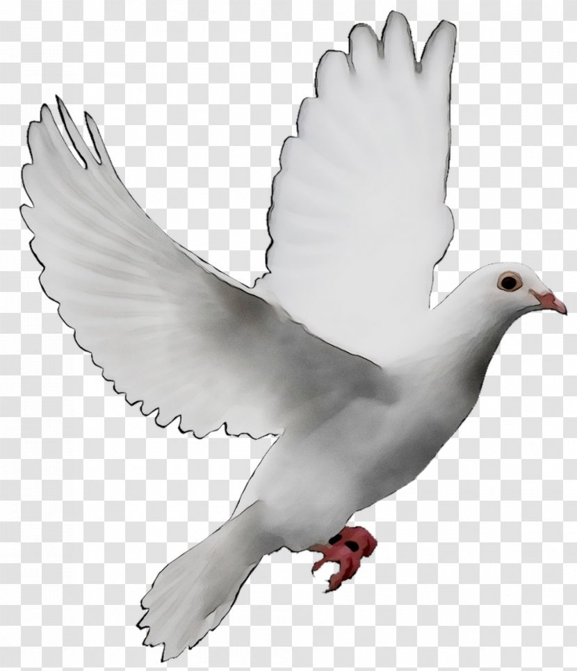 Pigeons And Doves As Symbols Release Dove Peace Image Wing Water Bird Transparent Png