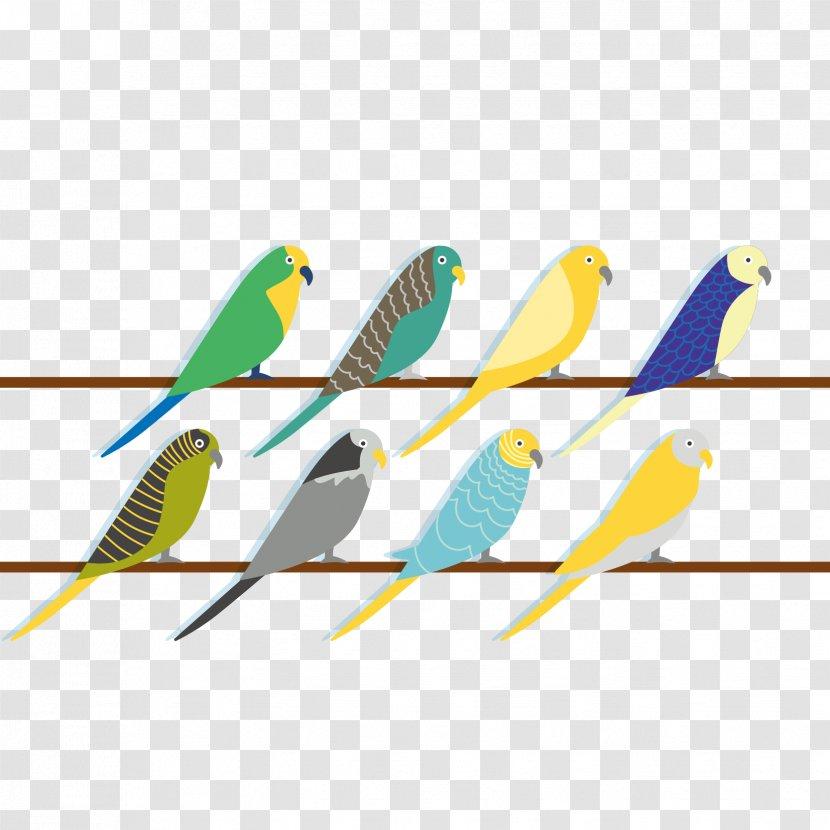 Budgerigar Parrot Bird Beak Vector Many Types Of Parrots Transparent Png