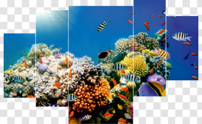 seagrass reef flora highdefinition television aquarium