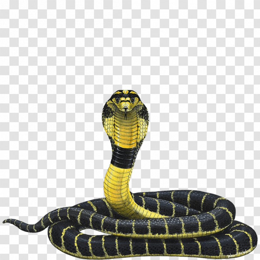 Snake Indian Cobra King Reptile - Scale Transparent PNG