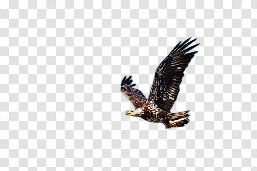 Bird Of Prey Eagle Accipitridae Golden Beak Hawk Transparent Png