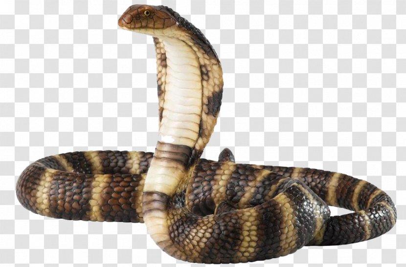 Snake King Cobra - Black Rat - Free Download Transparent PNG