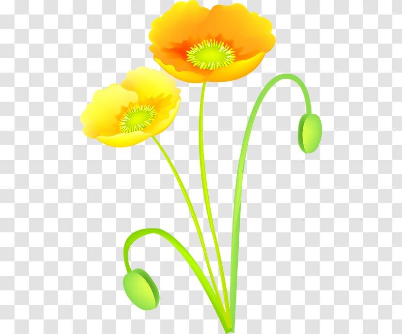 Cut Flowers - Poppy Family - Flower Transparent PNG