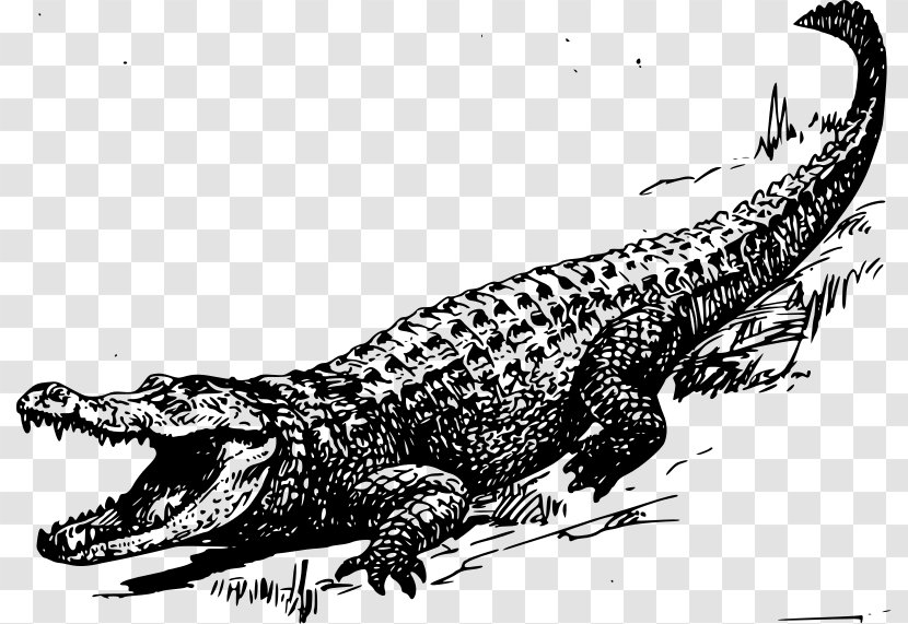 alligator crocodile black and white clip art reptile swamp cliparts transparent png swamp cliparts transparent png