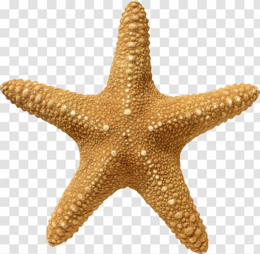 Starfish Wallpaper - Animal Transparent PNG