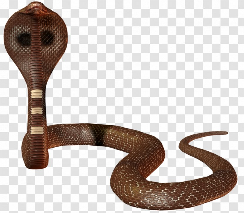 Snake Scaled Reptiles Indian Cobra Elapidae Transparent PNG