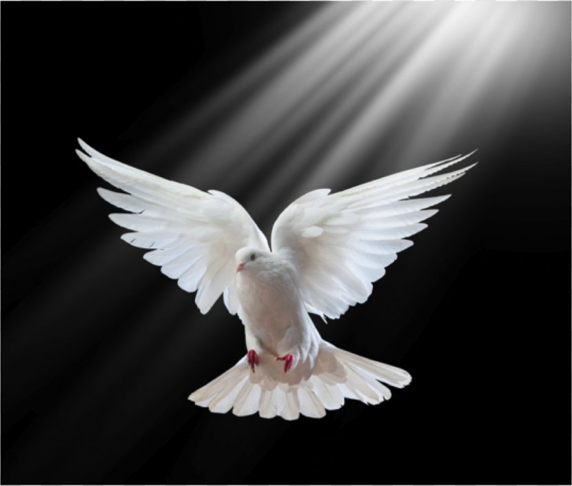 Columbidae Holy Spirit In Christianity Doves As Symbols - Symbol - Pigeon Transparent PNG