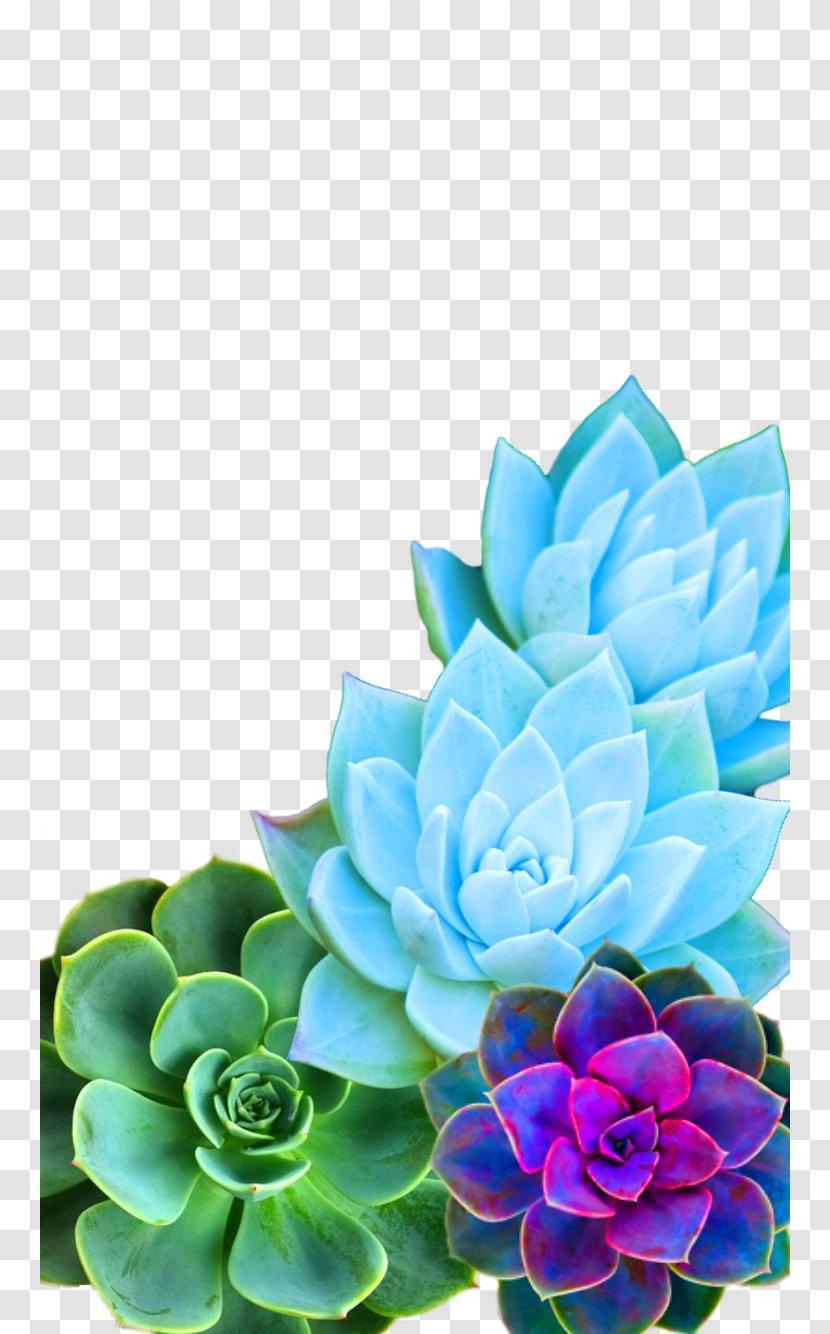 Succulent Plant Desktop Wallpaper Iphone 7 Cactus Image Purple Succulents Transparent Png