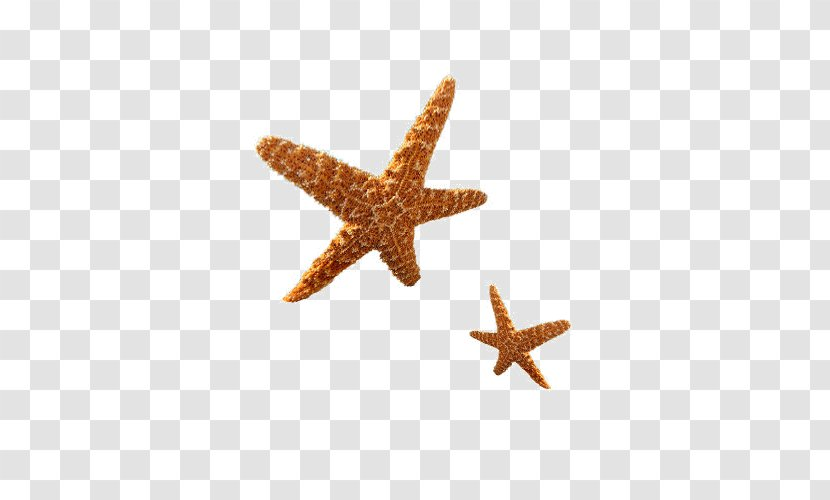 Starfish Transparent PNG