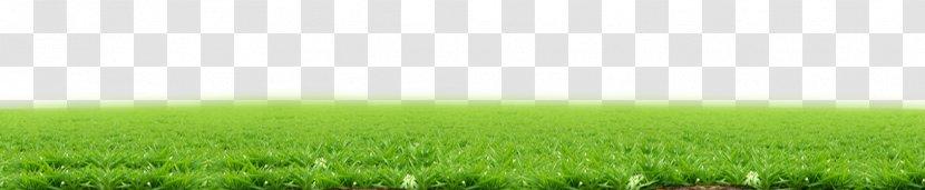 lawn wheatgrass land lot energy wallpaper green grass transparent png pnghut
