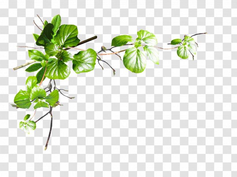Leaf Tree Plant Stem Flower - Flowering - Parsley Transparent PNG