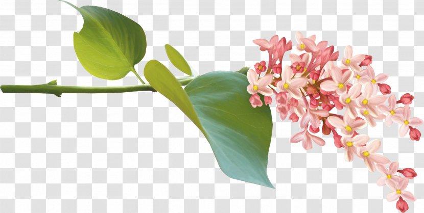 Flower Download Clip Art - Plant - 71 Transparent PNG