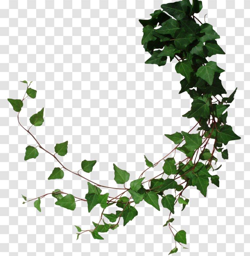 Floral Design Border clipart - Vine, Leaf, Green, transparent clip art