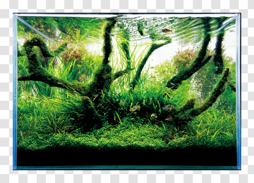 Nature Aquarium World Aquascaping Aqua Design Amano Filters Forest Fish Transparent Png