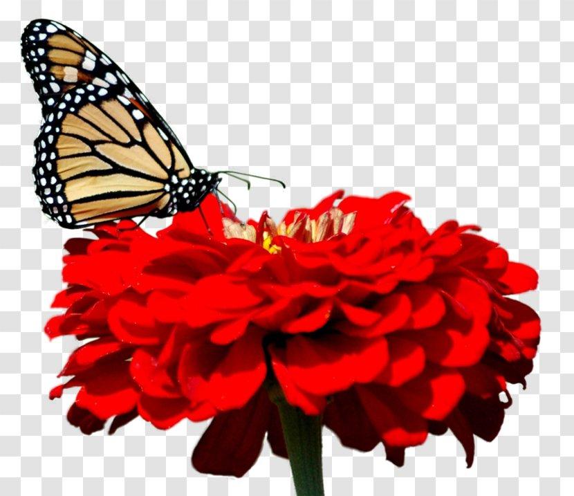 Butterfly Desktop Wallpaper 1080p High Definition Television Video Monarch Transparent Png