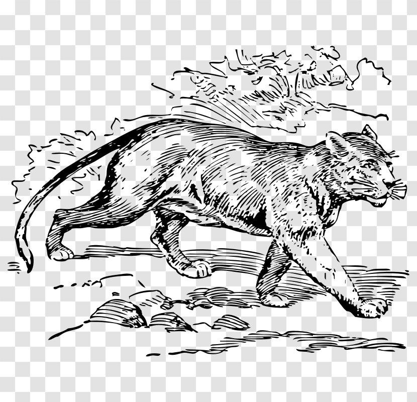 Cougar Jaguar South America Cat Black Panther Animal Pictures Of Campfires Transparent Png