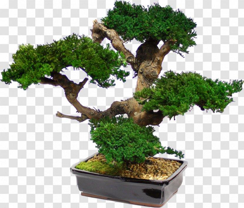 Bonsai Tree Japanese Maple Garden Interior Design Services Artificial Flower Transparent Png