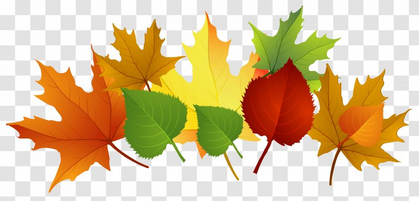 Maple Autumn Leaves Branch clipart. Free download transparent .PNG |  Creazilla