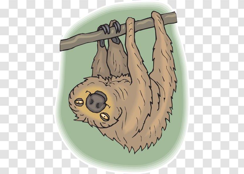 Sloth Amazon Rainforest Baby Jungle Animals Koala - Organism - Cliparts Transparent PNG
