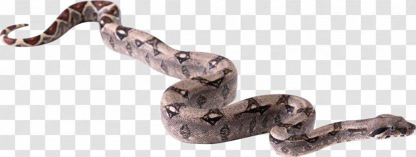 Snake Clip Art - Image Picture Download Free Transparent PNG