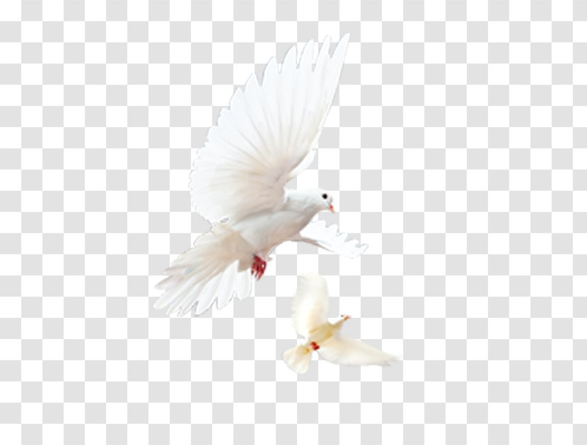Flight Bird Airplane Feather - Heavenly Wings Of A Dove Transparent PNG