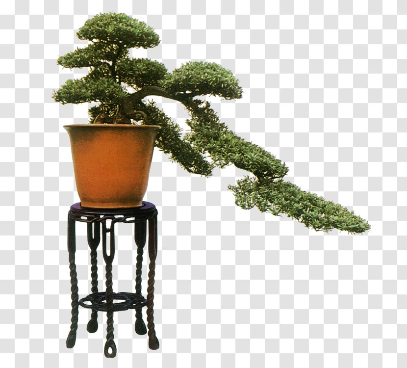 Bonsai Penjing Flowerpot Tree Chinese Garden Welcome Transparent Transparent Png