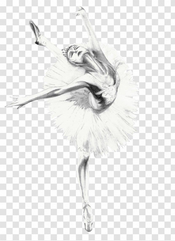 Ballet Dancer Feather Bird Drawing Sketch Transparent Png