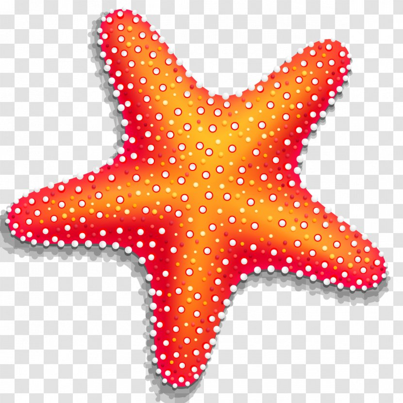 Starfish Computer File - Vector Transparent PNG