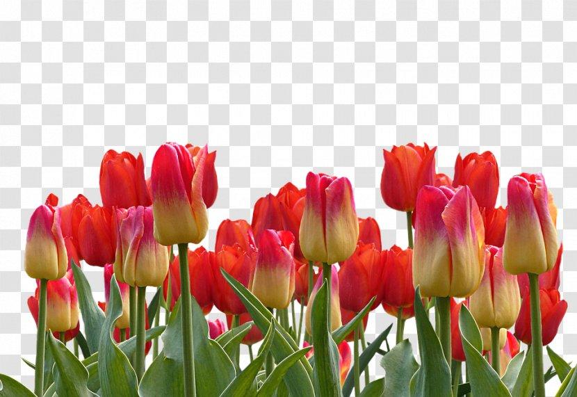 Tulip Garden Clip Art