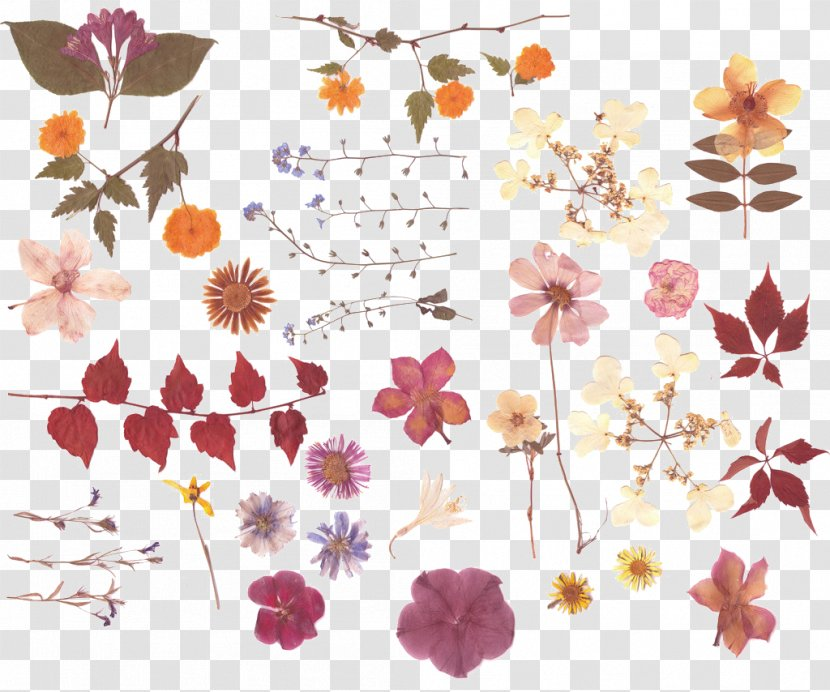 Pressed Flower Craft Nosegay Bouquet Petal Dried Leaves Flowers Transparent Png