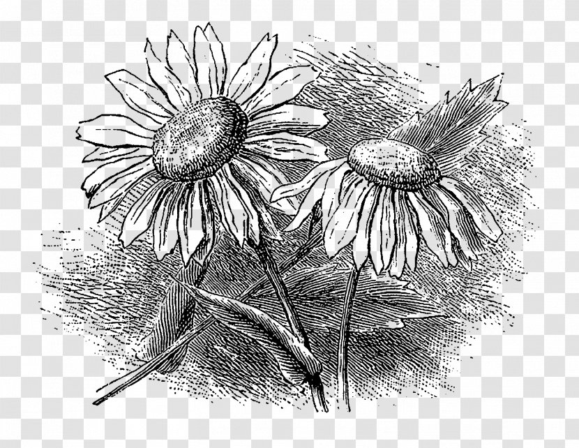 Monochrome Photography /m/02csf Still Life - Botanical Flowers Transparent PNG