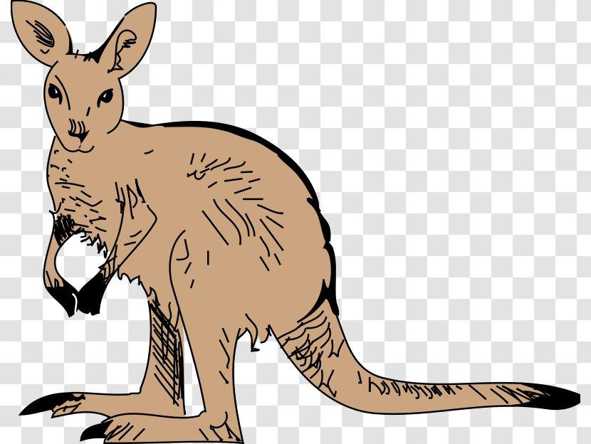 Baby Jungle Animals Zoo Kangaroo Clip Art - Macropodidae - Pictures Of Kangaroos Transparent PNG